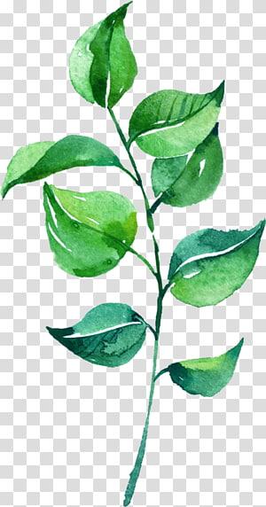 Lukisan Cat Air Daun, Daun Cat Air, daun hijau png