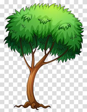 Pohon, Pohon Dicat, ilustrasi pohon png