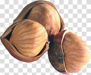 Kacang Hazelnut Kacang kastanye, biji png