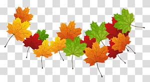daun maple, warna daun musim gugur warna daun musim gugur, daun gugur PNG clipart
