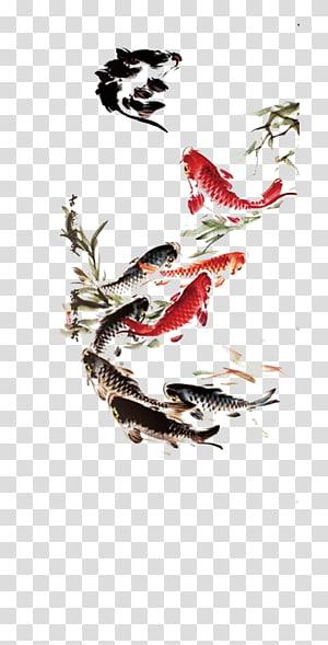 ilustrasi ikan koi hitam dan oranye, Koi Carassius auratus Lukisan menggambar Tinta, Ikan tinta png