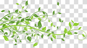 Daun, Dekorasi Musim Semi dengan Daun, ilustrasi daun hijau PNG clipart