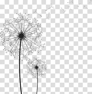 Common Dandelion Euclidean, Dandelion, lukisan siluet bunga png
