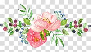 Bunga cat air, bunga petaled pink png