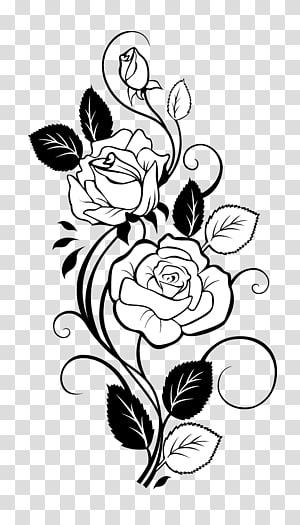 ilustrasi bunga putih, Rose Drawing Vine, Rose PNG clipart