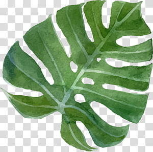 Menggambar Bunga Tropis, bunga tropis, seni daun hijau PNG clipart