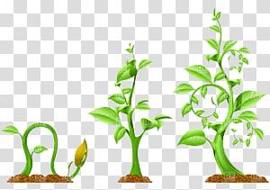 , menanam png