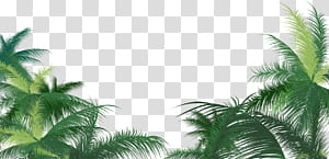 Arecaceae Leaf Areca palm, Green palm leaf, green palm tree PNG clipart