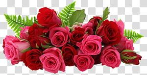 Bunga Mawar, Mawar Merah dan Merah Muda, close up buket mawar merah png