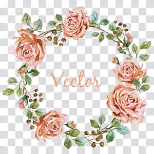 Grapher Videografi Pernikahan, Perbatasan bunga merah muda, karangan bunga mawar merah muda dengan hamparan teks png