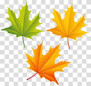 dua daun maple kuning dan satu hijau, warna daun musim gugur, Set Daun Musim Gugur PNG clipart
