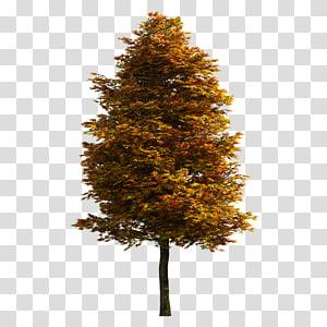 Pohon, pohon, pohon berdaun kuning dan oranye PNG clipart