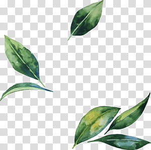 Ilustrasi Bunga Daun, daun cat air yang dilukis dengan tangan, daun hijau PNG clipart