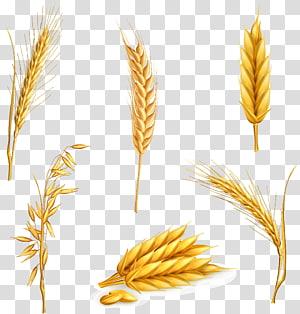 ilustrasi enam butir kuning, enam jenis gandum png