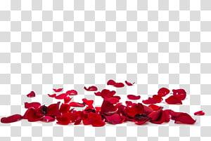 Bunga Kelopak Mawar .xchng, kelopak mawar merah, ilustrasi kelopak mawar merah png