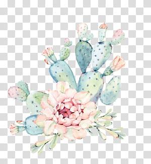 Lukisan Cat Air Cactaceae tanaman Sukulen Euclidean, Tangan dicat bunga cat air, tanaman hijau kaktus, kaktus hijau dan merah muda PNG clipart