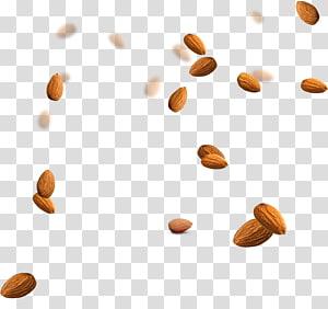 ilustrasi kacang almond, Almond Nucule Icon, almond png