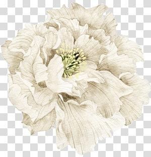 Putih, Bahan bunga putih cantik, ilustrasi bunga peony putih PNG clipart