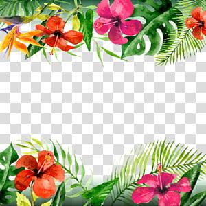 Leaf Arecaceae Flower, bunga musim panas, ilustrasi kembang sepatu merah-oranye png