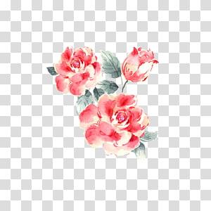 Taman mawar Menggambar, Menanam bunga png
