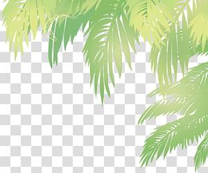 Arecaceae Leaf Euclidean Kelapa, daun kelapa, ilustrasi tanaman berdaun hijau png