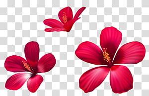 ilustrasi bunga merah, bunga merah muda, Bunga Merah Muda Eksotis png