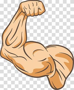ilustrasi bicep manusia yang tepat, Otot Kebugaran fisik Jempol, Lengan pelatih PNG clipart