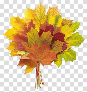 ilustrasi daun maple aneka warna, buket bunga Daun musim gugur, Daun Musim Gugur PNG clipart