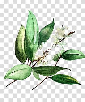 lukisan tanaman berdaun hijau, ikon Lukisan Cat Air, daun Cat Air png