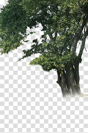 Pohon Woody menanam Batang Cabang, ganpati png