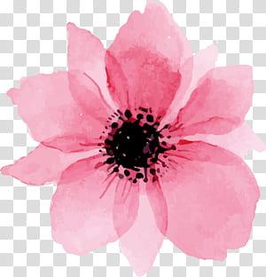 Euclidean, bunga cat air merah muda yang indah, lukisan bunga petaled merah muda png