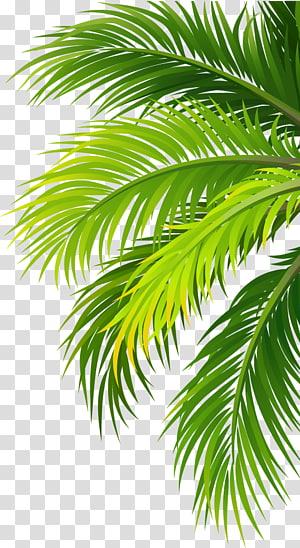 stiker pohon palem hijau, Pabrik saringan udara air kelapa, daun png