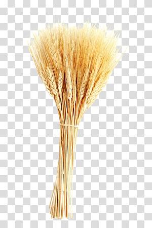Wheat Ear Barley Ikon, gandum, pengaturan gandum merah png