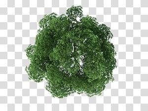 Rendering Pohon, tampilan atas pohon, dari pohon coklat dan hijau png