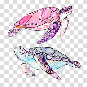 dua ilustrasi kura-kura dengan berbagai macam warna, Ilustrasi Kartun kura-kura laut, Drawing Turtle png