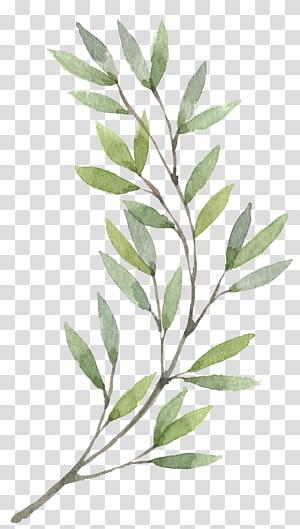 Karangan Bunga Lukisan cat air Bunga, Tanaman Tangan-dicat, lukisan daun hijau png