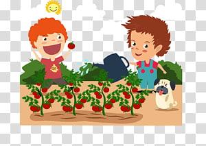 Ikon Euclidean Tomat, Anak laki-laki menanam tomat png
