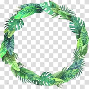 Daun Euclidean, Daun semak musim panas, mahkota daun hijau dengan latar belakang biru png
