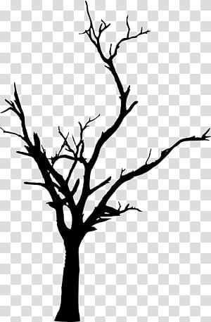 Pohon Woody menanam Cabang Ranting, pohon mati png