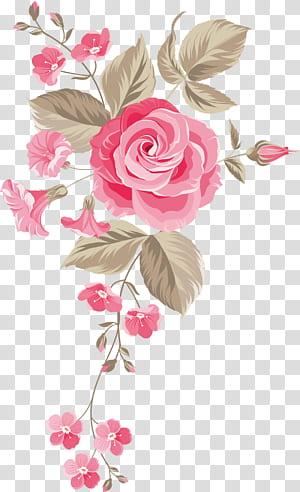 Mawar taman Mawar Centifolia Desain bunga Bunga potong Karangan bunga, Latar belakang bunga yang dilukis dengan tangan, mawar merah muda png