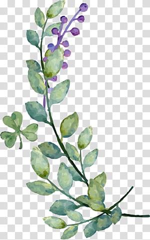Undangan Pernikahan Kehidupan Kedua Pengantin, Dekorasi cat air daun blueberry, lukisan daun hijau PNG clipart