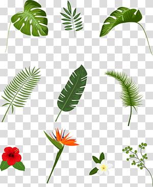 banyak tanaman berdaun, Leaf Tropics Plant Euclidean, daun yang dilukis dengan tangan PNG clipart