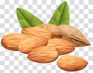 ilustrasi kacang merah, Almond, Almond Nuts png