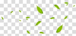 Daun Hijau, Daun hijau terbang bersama angin, tanaman berdaun hijau dengan latar belakang biru png