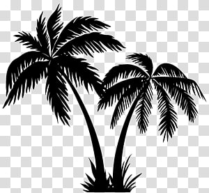 Silhouette Arecaceae, Palms Silhouette png