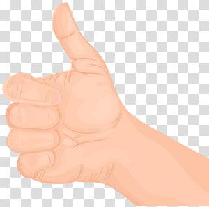 jempol ke atas, Thumb Hand model Nail, Gerakan Thumbs Up Hand PNG clipart
