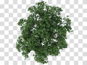Arsitektur Pohon Pemetaan tekstur, denah pohon, close-up pohon daun hijau png