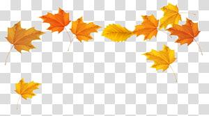 Warna daun musim gugur, Daun Jatuh, daun maple coklat dan kuning PNG clipart