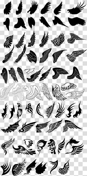 ilustrasi berbagai macam sayap, Gambar Burung Euclidean, Koleksi sayap beragam png