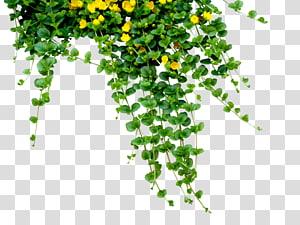 Menanam bunga, karangan bunga png